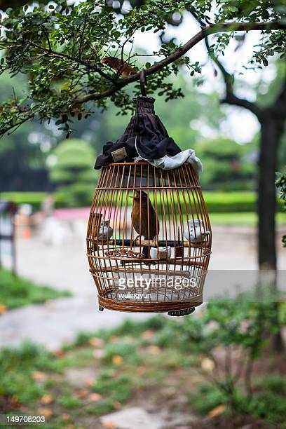 Bird in hanging bird cage