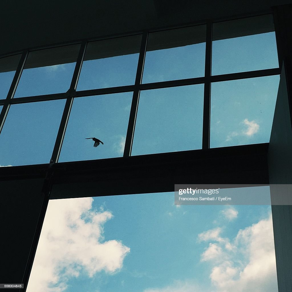 Bird In Sky Behind Window High-Res Stock Photo - Getty Images