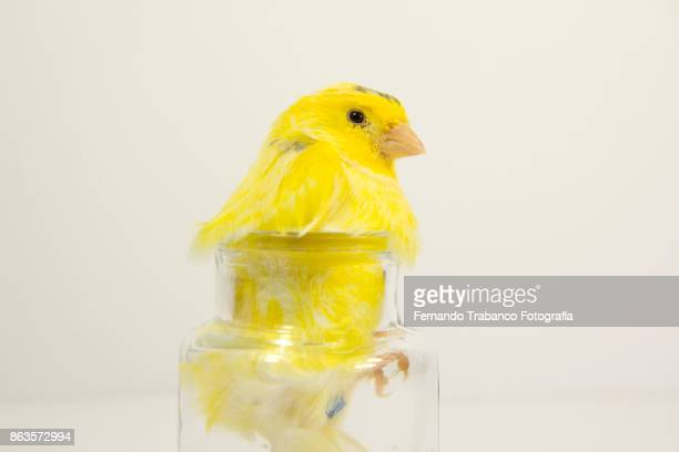 bird inside a glass jar