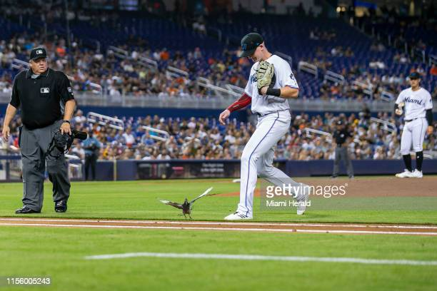 Bird interrupts the second inning of a Major League Baseball game between the Miami Marlins and the San Diego Padres at Marlins Park in Miami on...
