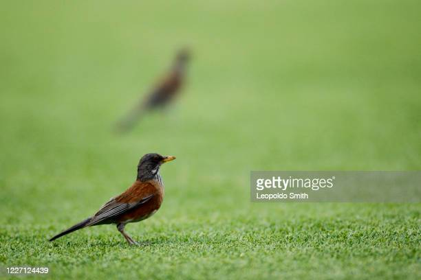 A bird is seen during a match between Leon and FC Juarez as part of the friendly tournament Copa Telcel at Leon Stadium on July 14 2020 in Leon Mexico