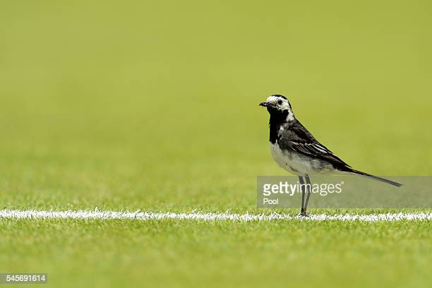 A bird is seen on Centre Court as Serena Williams of The United States and Angelique Kerber of Germany play in the Ladies Singles Final match on day...