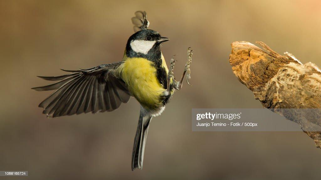 Bird landing on branch : Foto de stock