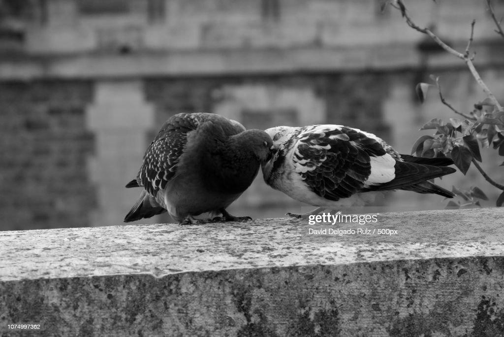 Bird Love by David Delgado Ruiz [ DDR ] : Foto de stock