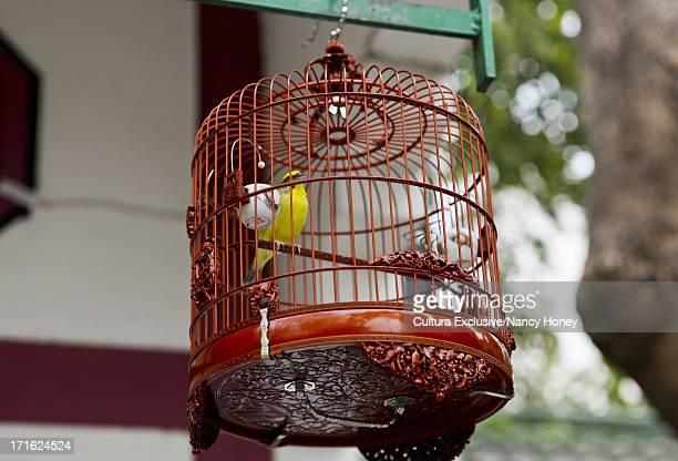 Bird market, Hong Kong, China