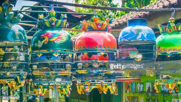Bird Market in Yogyakarta, Indonesia