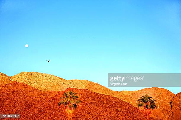 bird moon and desert mountains palm springs - palm springs stock-fotos und bilder
