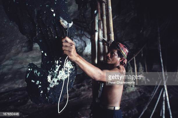 A bird nest collector climbs bamboo scaffolding in 'Viking' Cave The cave is called Viking Cave because of the drawings of Viking ships on the cave...