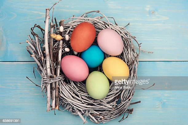 Bird nest filled with pastel color eggs. Debica, Poland