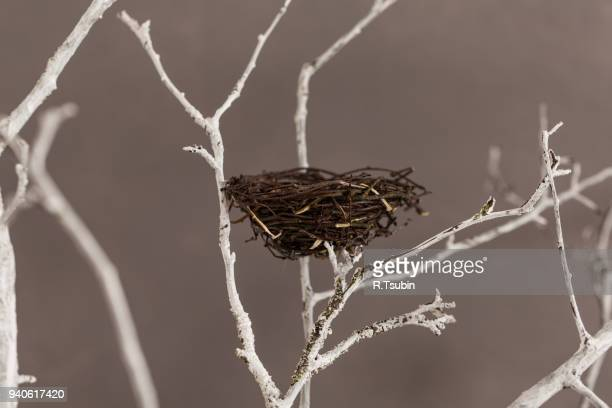 bird nest on a tree - bird's nest stock photos and pictures