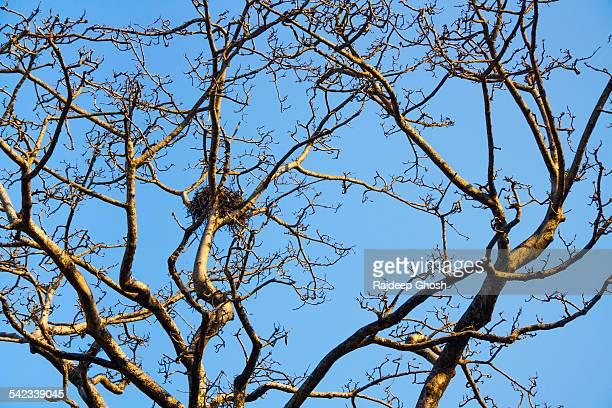 bird nest on dry tree - 国立オリンピック競技場 ストックフォトと画像