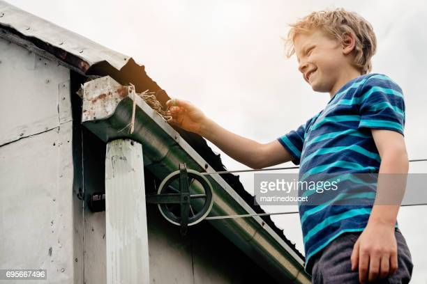 Bird nest on the shed, little boy proudly showing an egg.
