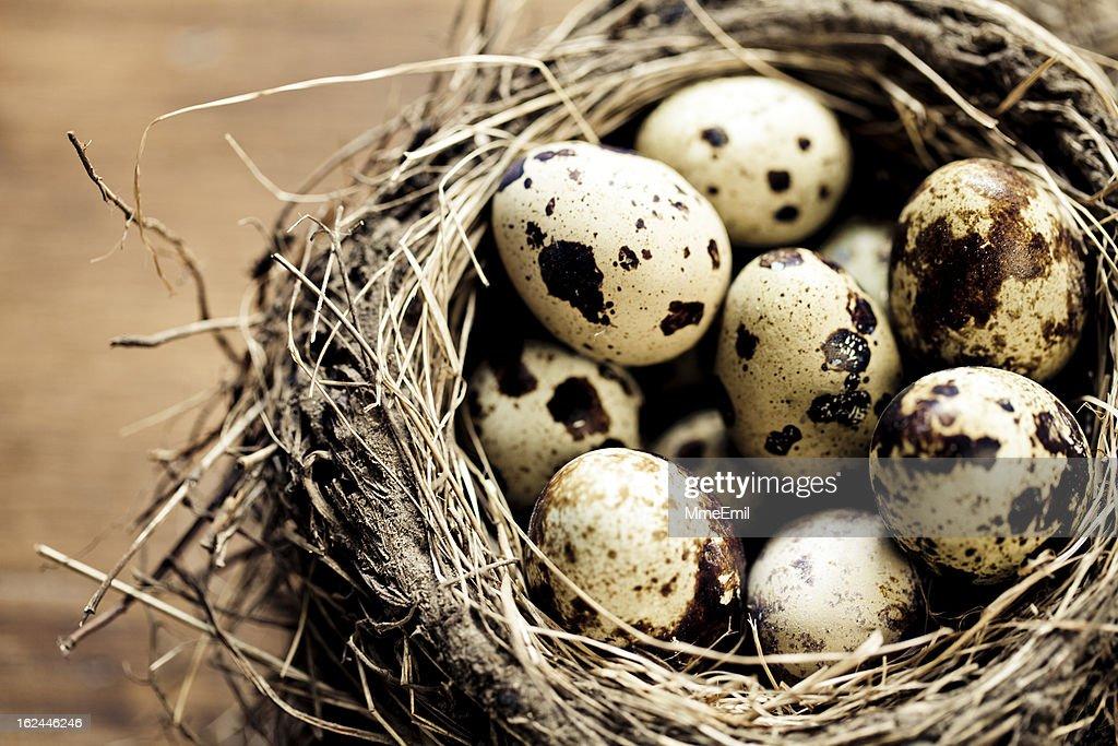 Bird Nest : Stock Photo