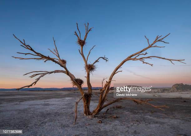 Bird nests in trees that were once surround by the waters of the Salton Sea are disused on December 29, 2018 near Calipatria, California, United...