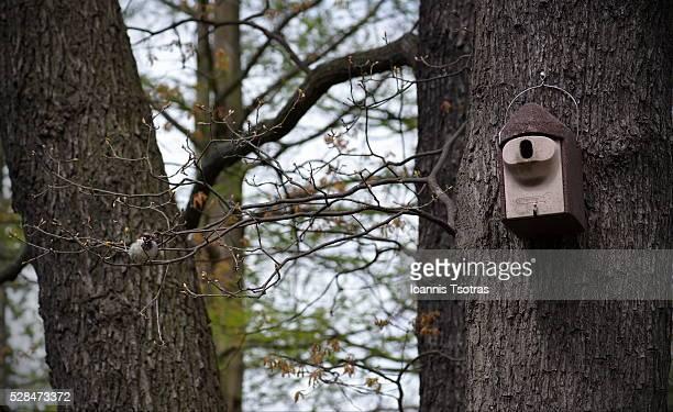 Bird next to a wooden birdhouse