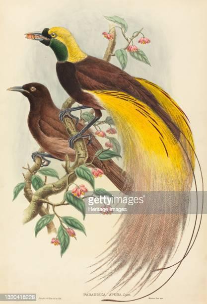 Bird of Paradise , published 1875-1888. Artist John Gould, William Matthew Hart.