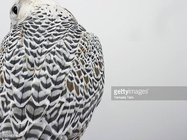 Bird of prey (Aves), close-up, rear view