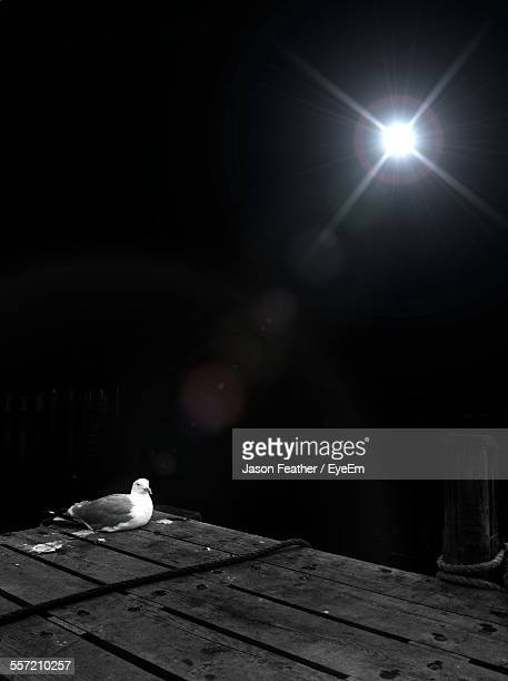 Bird Of Wooden Structure Under Light