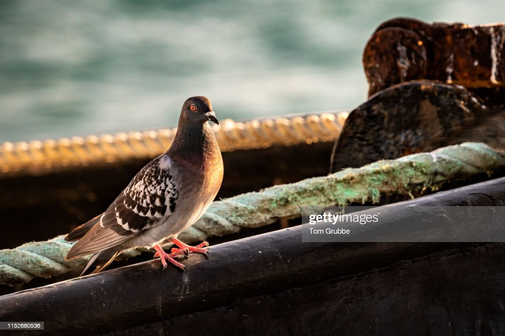 Bird on a boat : Stock Photo