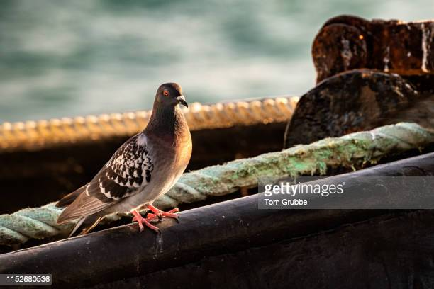 bird on a boat - tom grubbe stock pictures, royalty-free photos & images