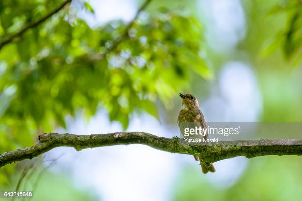 bird on a branch with shiny bright background - birdsong stock pictures, royalty-free photos & images