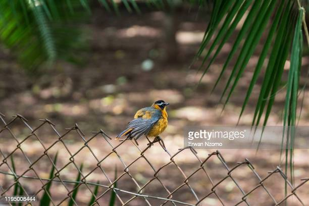 bird on a fence - southern africa stock pictures, royalty-free photos & images