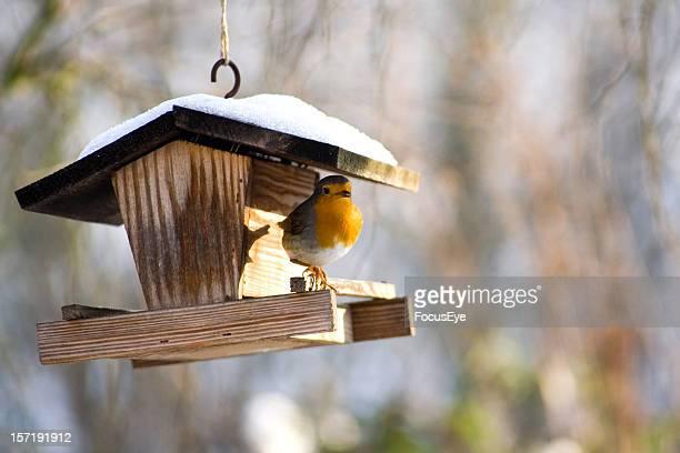 A bird on a hanging bird feeder