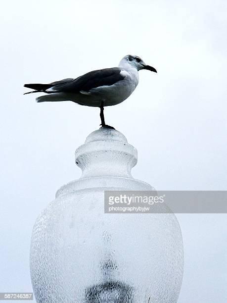bird on a lamp - southport north carolina ストックフォトと画像
