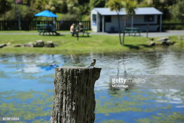 A bird on a stake,Pastoral life