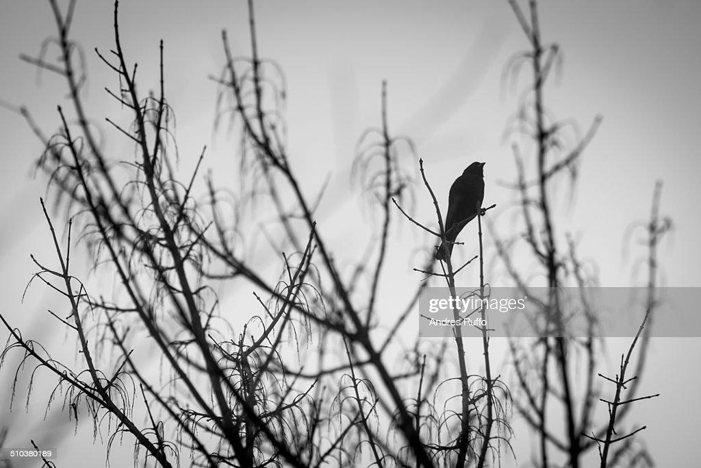 Bird on a Tree : Stock Photo
