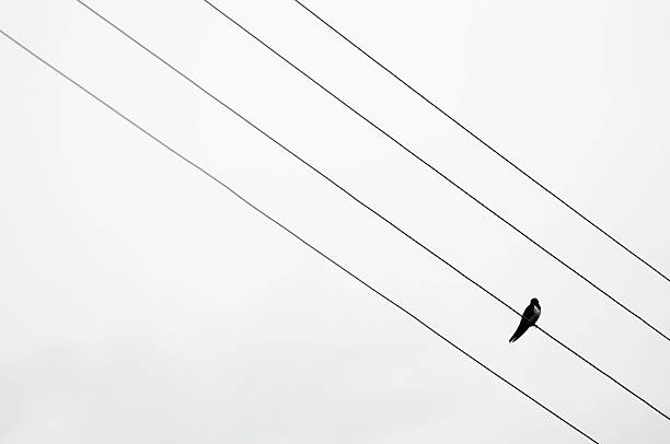 Bird On A Wire Wall Art