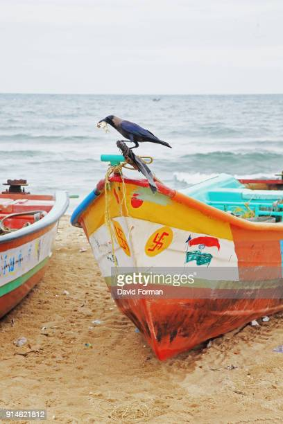 bird on fishing boat, marina beach, chennai - perch fish stock pictures, royalty-free photos & images