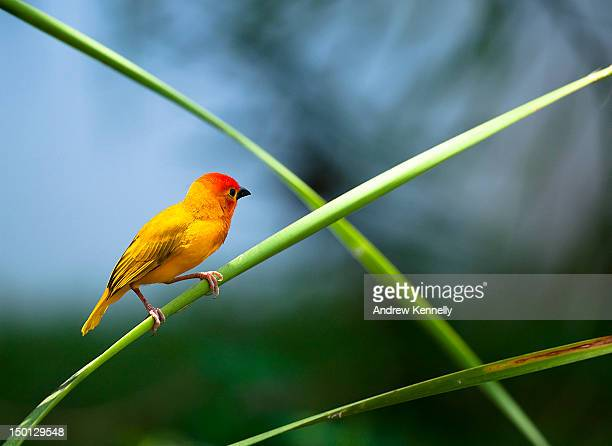bird on leaf blad - blad stock pictures, royalty-free photos & images