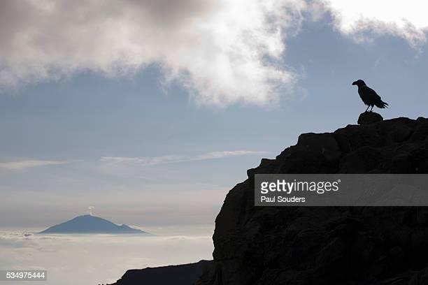 bird on ledge and mount meru - meru filme stock-fotos und bilder