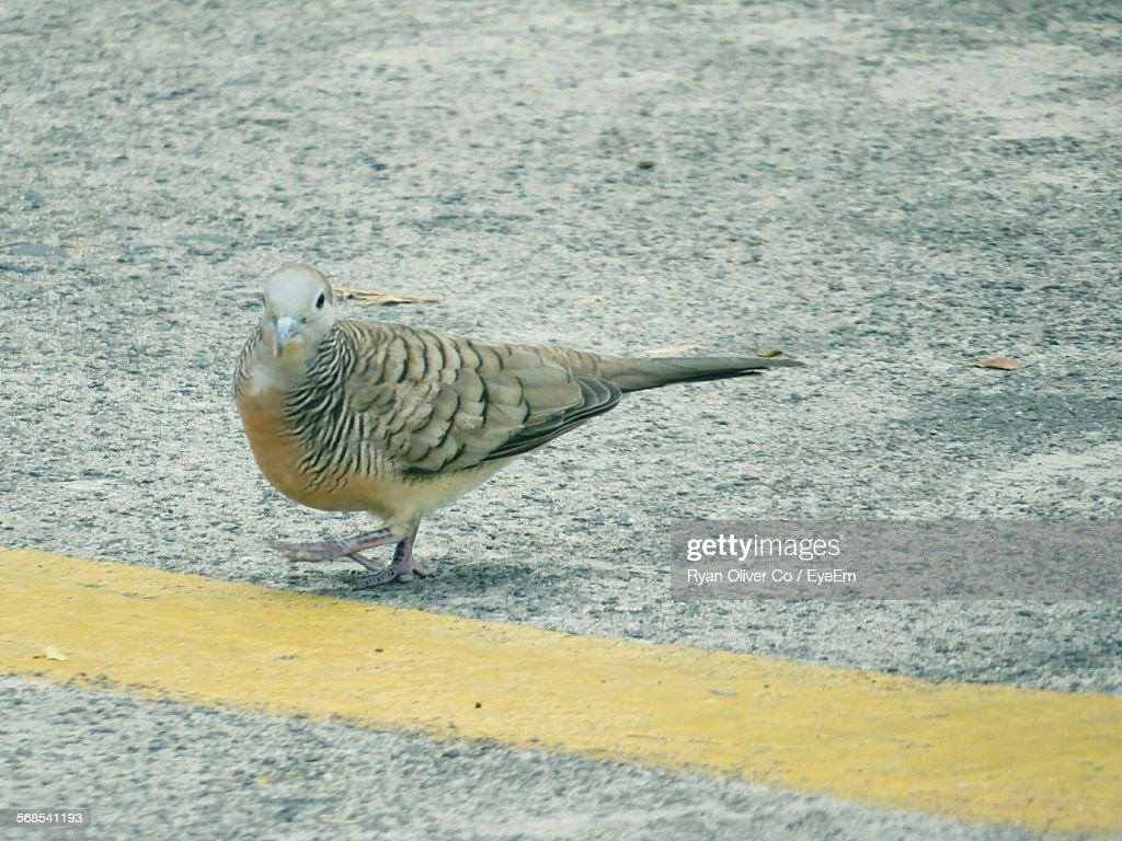 Bird On Road : Stock Photo