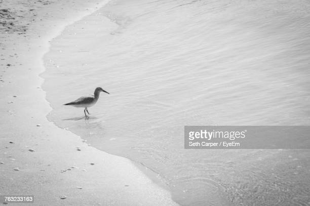 Bird On Shore At Beach