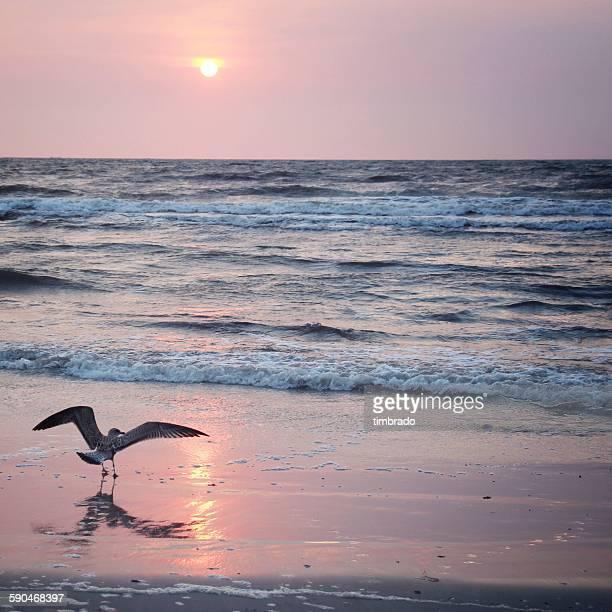 Bird on the beach at sunrise, Germany