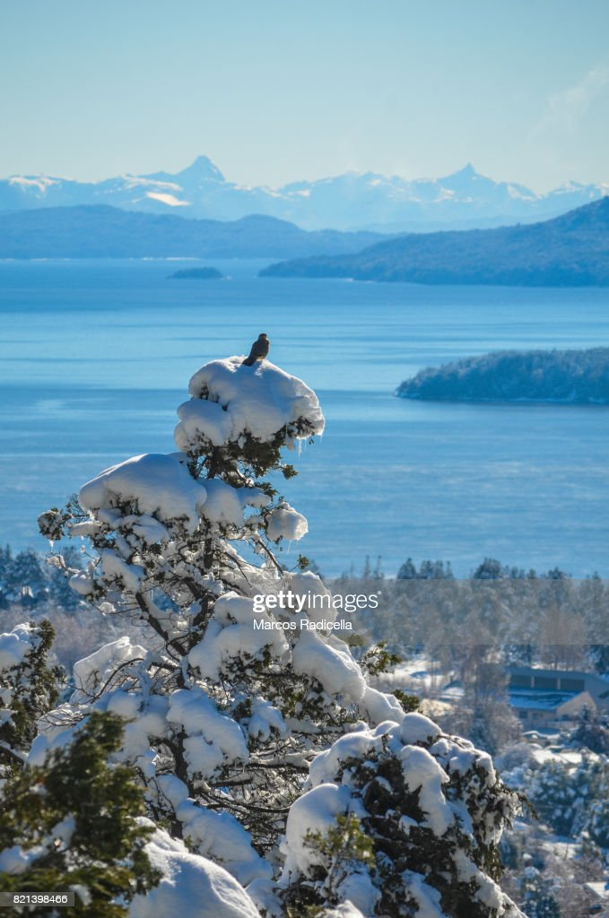Bird on top of snowy tree, Bariloche, Patagonia : Stock Photo