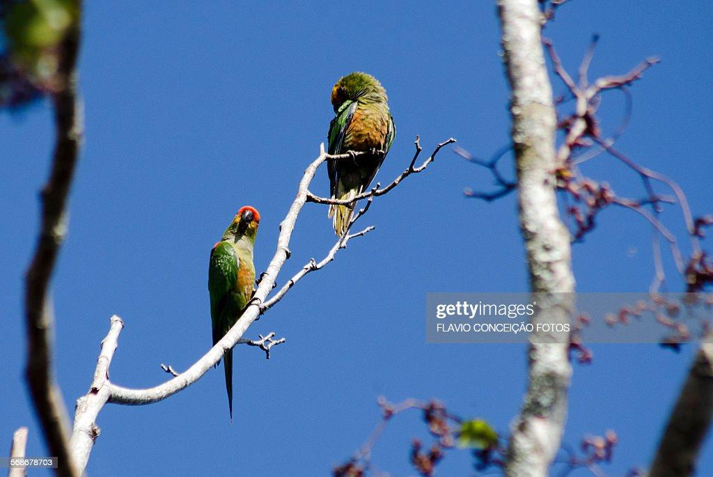 Bird parrots : Stock Photo