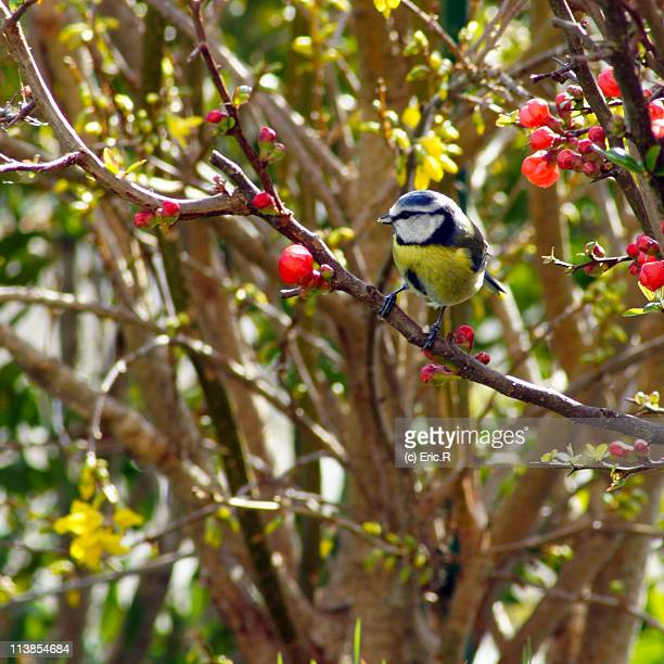 Bird perched on crab apple tree
