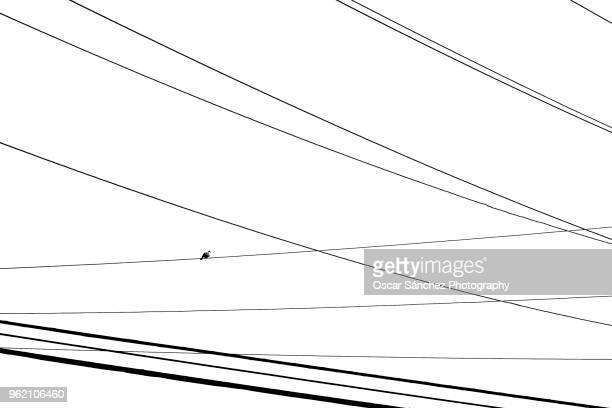 bird perched on electrical power cables in the street - perching stock photos and pictures