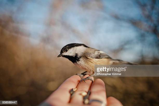 A bird perched on human hand.