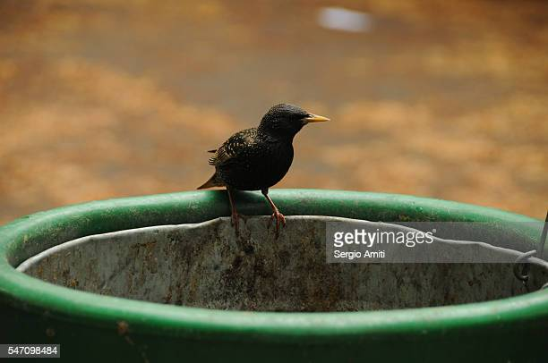Bird perched on the rim of a bin