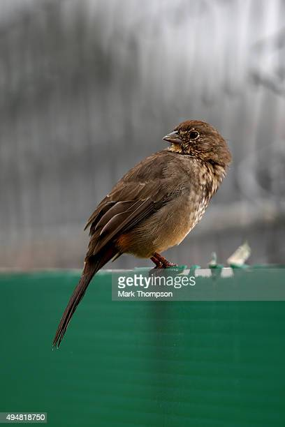 Bird perches on a wall next to the track ahead of the Formula One Grand Prix of Mexico at Autodromo Hermanos Rodriguez on October 28, 2015 in Mexico...