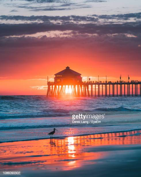 bird perching at beach during sunset - huntington beach stock pictures, royalty-free photos & images