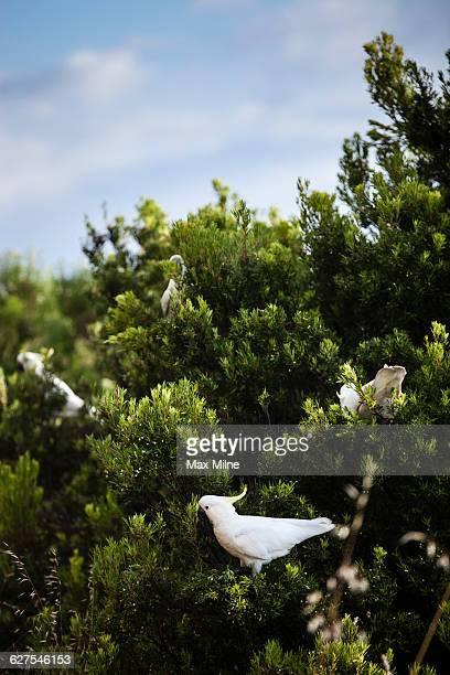 Bird perching in tree
