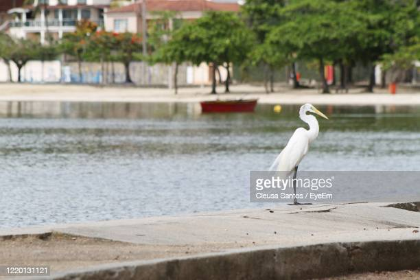 bird perching on a sea - píer stock pictures, royalty-free photos & images