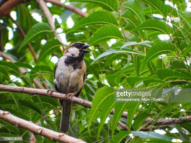 bird perching on a tree - birdsong stock pictures, royalty-free photos & images