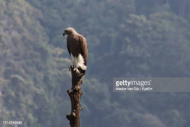 bird perching on a tree - van dijk stock pictures, royalty-free photos & images