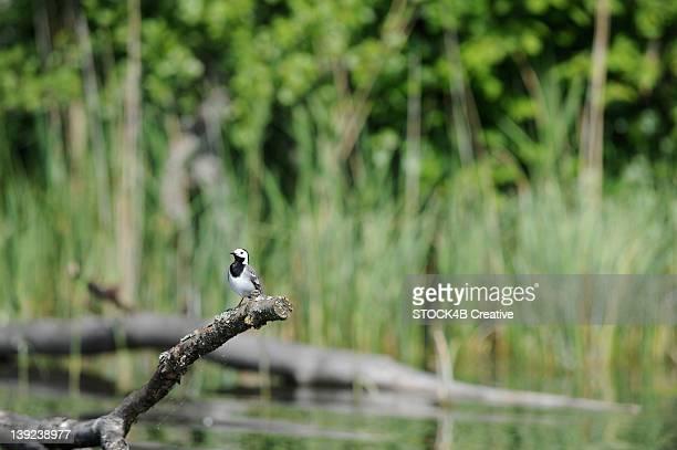 Bird perching on branch at River Krutynia, Masuria, Poland